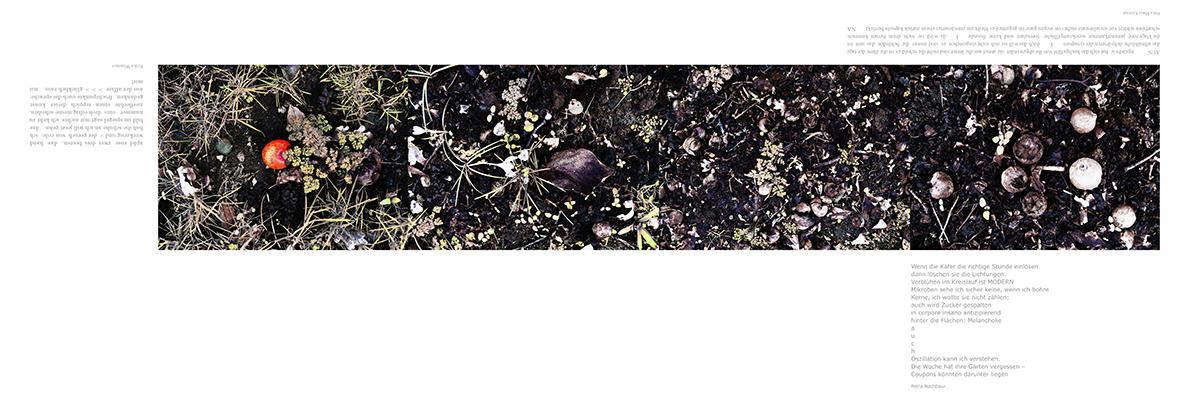 12_Lesezeichen, Boden im Obstgarten