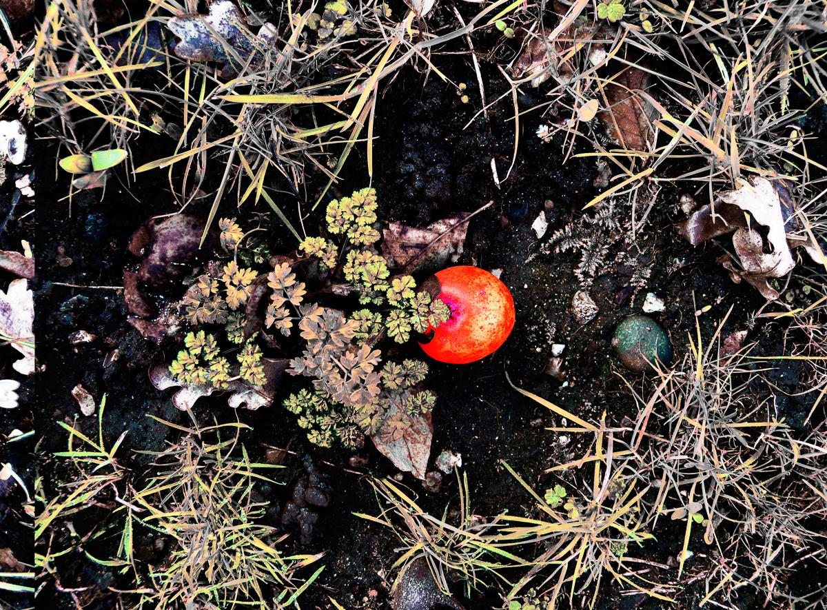 Apfel am Gartenboden