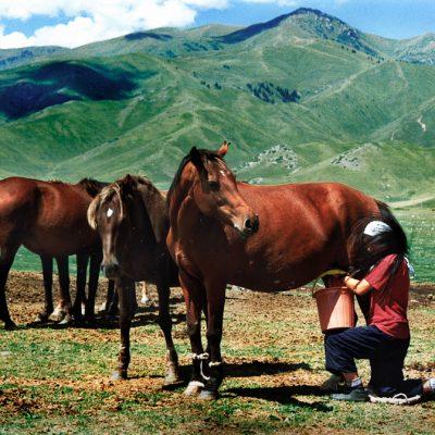 Halbnomaden beim Pferdemelken