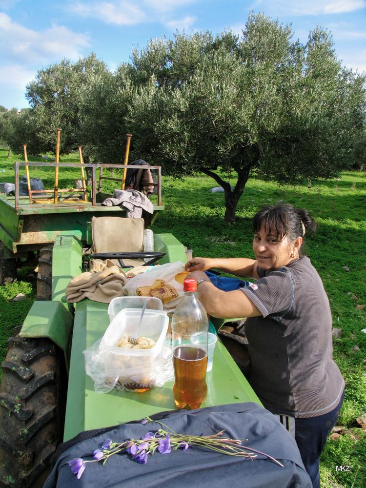Olivenernte in Lassithi, Kreta 2006